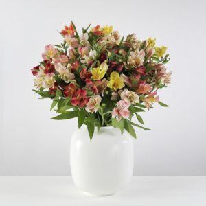 32 British Alstroemeria - flowers