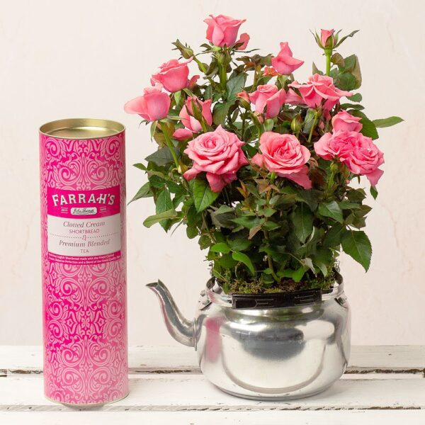 Afternoon Tea Rose Gift